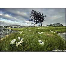 Daisey at Dog Rocks Photographic Print