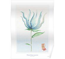 Fleur bleue 03 Poster