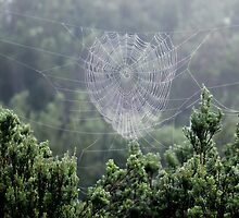 A Beautiful Spider's Web by Nick Delany