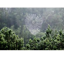 A Beautiful Spider's Web Photographic Print