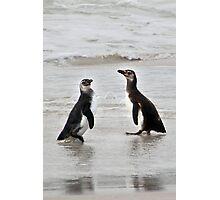 Magellanic Penguin Juveniles Photographic Print