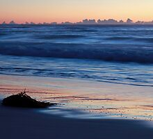 Kelp and Sunrise by Nick Delany