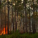 Fire In Osceola  by Michael L Dye