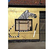 Collingwood - Zebra Photographic Print