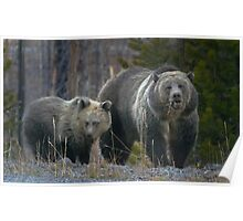 Grizzly Bear Sow And Cub-#3317 Poster