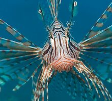 Lionfish by MikMoxter