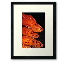 white-edged soldierfish Framed Print