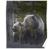 Grizzly Bear Sow And Cub-#3438 Poster
