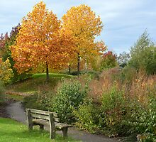 A bench to enjoy autumn colors by Arie Koene