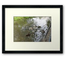 Fish & ducks Framed Print