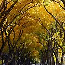 Golden Lane by Loree McComb