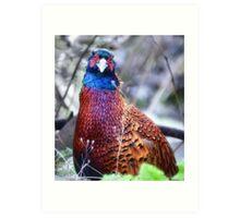 Pheasant. Art Print
