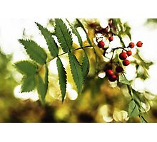 Autumn Berries Photographic Print