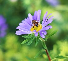 Busy Bee by AbigailJoy