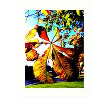Backlit Leaf Art Print