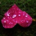 Heart of a leaf. by Karen  Betts