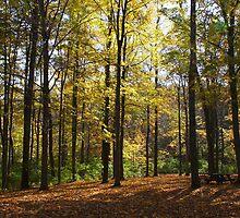Autumn Color - Houston Woods Ohio by virtualdiablo