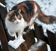 Molly in the snow by Karen Brodie