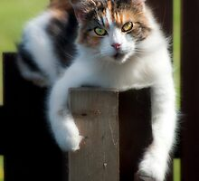 Molly hanging about! by Karen Brodie