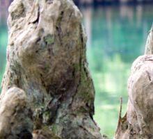Cypress Knees Sticker