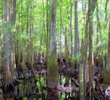 Cypress Swamp Sticker