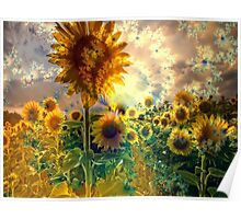 Sunflowers in a Field Poster