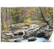 A Light In The Forest - Unami Creek - Green Lane PA Poster