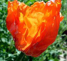 Village Crumpled Poppy by Samantha Bailey