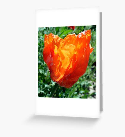 Village Crumpled Poppy Greeting Card
