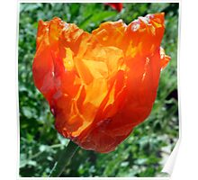 Village Crumpled Poppy Poster