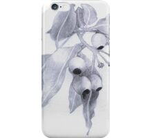 Gum Nuts & Leaves iPhone Case/Skin