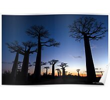 Sunrise at the avenue of Baobab, Madagascar Poster