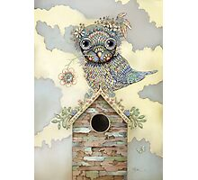 Blue Owl Birdhouse I Photographic Print