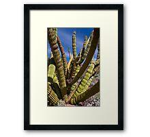 Cristate Organ Pipe Cactus Framed Print