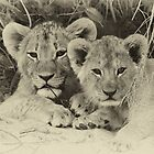 Priceless cubs! by jozi1