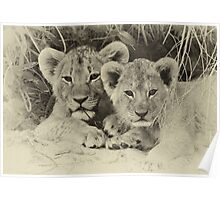 Priceless cubs! Poster