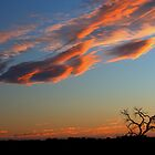 one dead tree by fazza