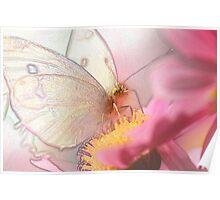 Cabbage Moth (Pieris Rapae) (Topaz Simplified) Poster