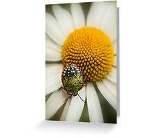 Colorful stink bug Greeting Card