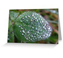 Green leaf with waterdrops Greeting Card