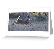 On Prancer! - White-tailed Buck Greeting Card