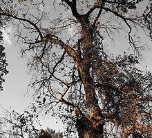 Continual Autumn by DeeAshley