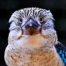 Kookaburra  by Tom Newman