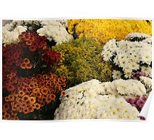 Assorted Cut Flowers Poster