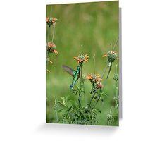 Sparkling Violetear Hummingbird Hovering Greeting Card