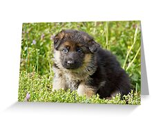 Puppy Looking Greeting Card
