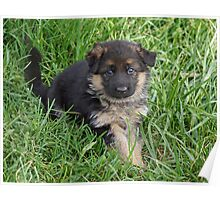 Puppy in Grass Poster