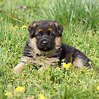 Puppy in Spring Yard by Sandy Keeton
