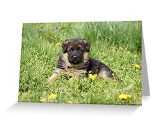 Puppy in Spring Yard Greeting Card
