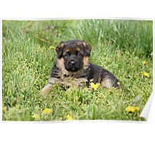 Puppy in Spring Yard Poster